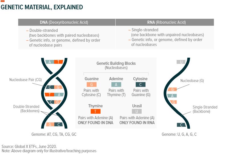 Genomics: How a Cutting-Edge Field is Fighting COVID-19 – Global X ETFs
